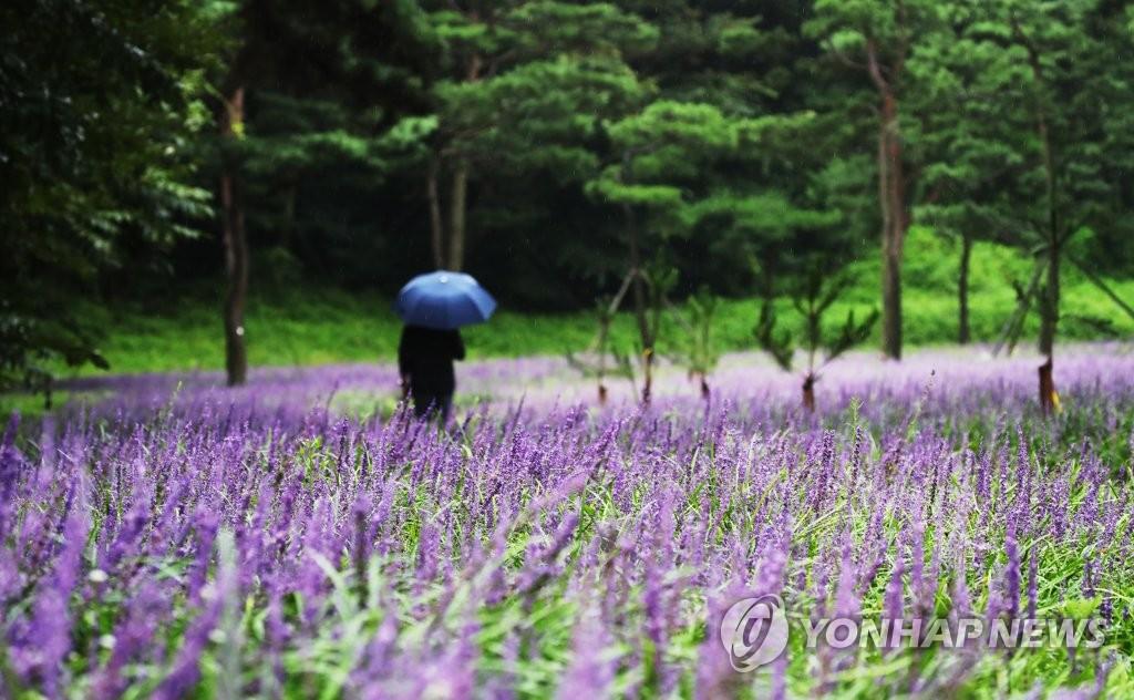 오늘밤까지 경남권 동부 강한 비…내일 낮에도 선선한 날씨