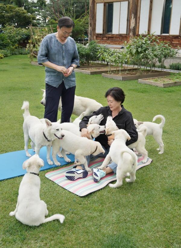 문재인 대통령은 1일 김정은 북한 국무위원장이 선물한 풍산개 '곰이'가 낳은 새끼 7마리의 이름을 공개하고 지자체에 분양한다고 밝혔다. 사진=연합뉴스