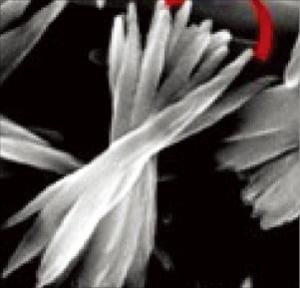 아미노산과 황화구리를 결합해 스스로 만들어지는 '나노 꽃' 전자현미경 사진.  /KAIST 제공