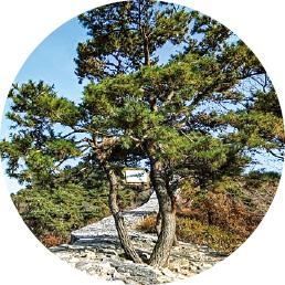 천년 산성에 내려앉은 가을…남한강 벗삼아 성곽 한바퀴