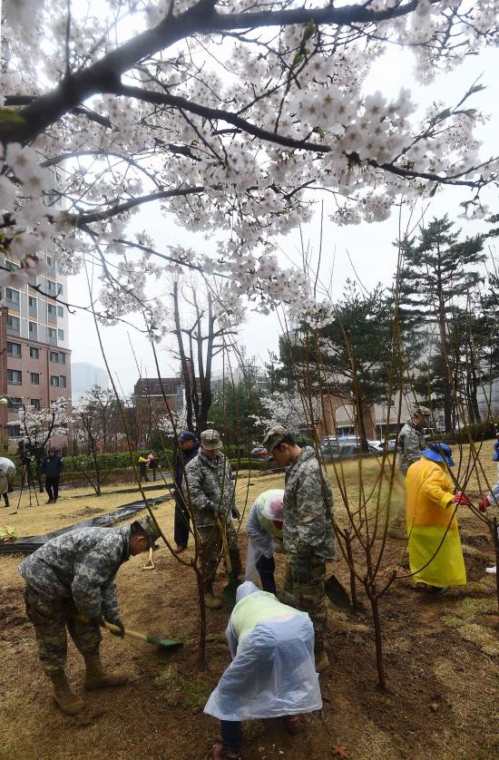 식목일날, 나무심는 주한미군 장병들